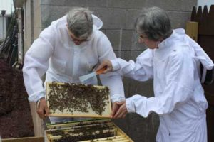 Honebees Thriving At Mount St. Francis Center