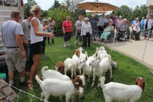 Sisters Use Goats To Help Clear Invasives On Property