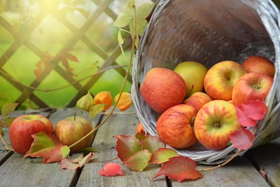 CoCC Hosts Autumn Acorns And Apples